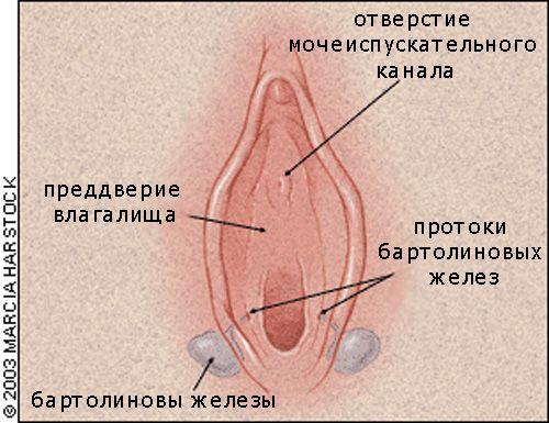 Как увеличить масштаб пенис