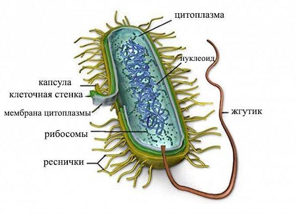 Генитальная микоплазма