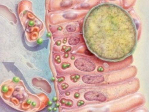 Хламидиоз у женщин при беременности симптомы и лечение