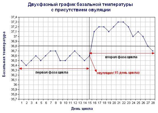 Как определить день овуляцию по слизи или базальной температуре, тесты и другие признаки