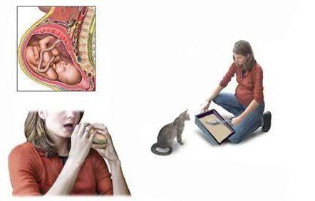 Токсоплазмоз: симптомы, последствия при беременности и основные пути заражения
